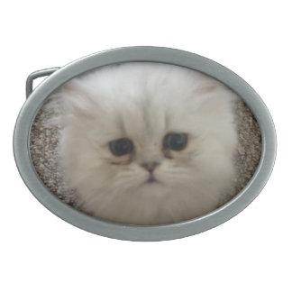 Weißes flaumiges Kätzchen der traurigen Augen, das Ovale Gürtelschnallen