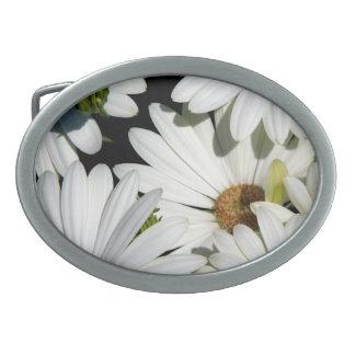 Weißes Gänseblümchen-Blumen Ovale Gürtelschnallen