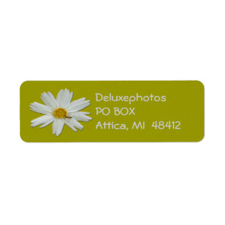 Weißes Gänseblümchen-kleine Biene Rücksende Aufkleber