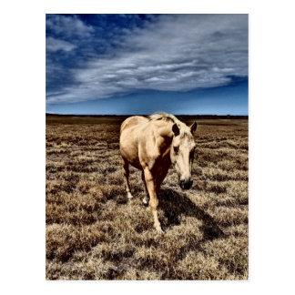 Weißes Horse.JPG Postkarte
