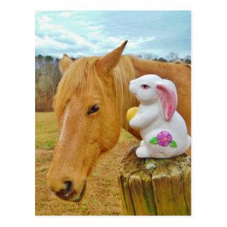 Weißes Kaninchen und blondes gelbes Pferd Postkarten