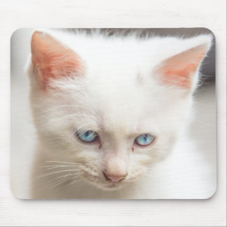 Weißes Kätzchen Mousepad