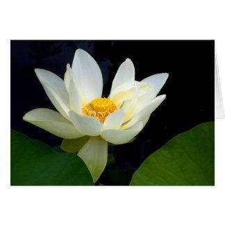 Weißes Lotus Karte