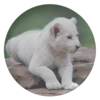 Weißes Löwejunges 2 des Babys Teller