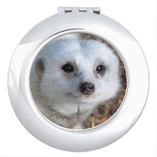 Weißes Meerkat stellen gegenüber, Taschenspiegel
