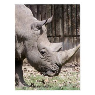 weißes Nashorn Postkarte