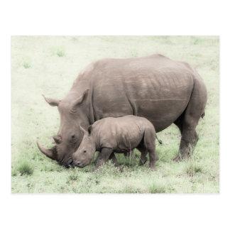 Weißes Nashorn u. Baby-Postkarte Postkarte
