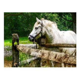 Weißes Pferd, das weg schaut Postkarte