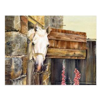 """Weißes Pferd """"des frechen Jungen"""" in einer Scheune Postkarte"""