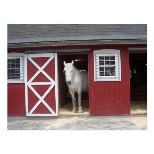 Weißes Pferd in der roten Scheune Postkarten