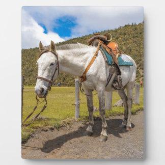 Weißes Pferd oben gebunden an Nationalpark Fotoplatte