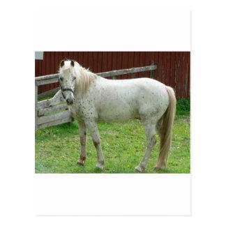 Weißes Pferd Postkarte