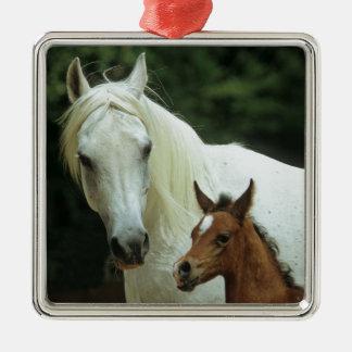 weißes Pferd,Schimmel mit Fohlen, Quadratisches Silberfarbenes Ornament