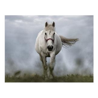 Weißes Pferdebetrieb Postkarte