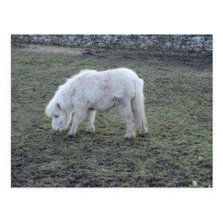 Weißes Pferdeminiaturgeschenke Postkarte