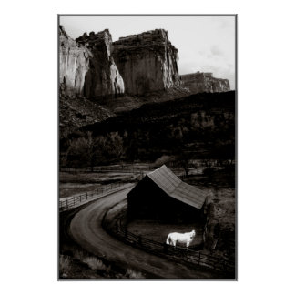 Weißes Pferdemonochrom in Canyonlands Plakat