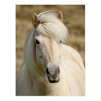 Weißes Pony Postkarte