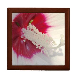 Weißes rosa Nahaufnahme photographt Geschenkbox