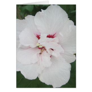 Weißes Rot Rosen-Sharons Karte