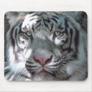 Weißes Tiger-Porträt Mousepad
