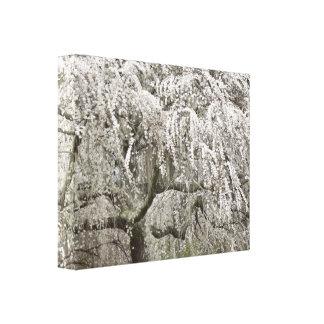 Weißes weinendes Kirschbaum-Blüten-Foto Leinwanddruck