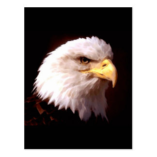 Weißkopfseeadler-Amerikaner Eagle Postkarte