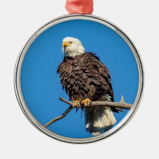 Weißkopfseeadler auf einem Baumast Rundes Silberfarbenes Ornament