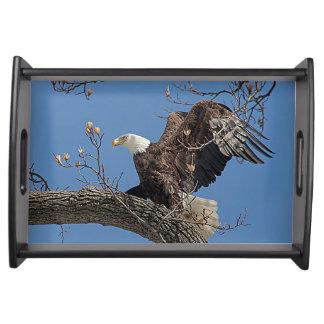 Weißkopfseeadler auf einem Baumast Serviertablett