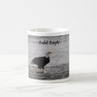 Weißkopfseeadler auf Lachsen Kaffeetasse