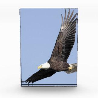 Weißkopfseeadler Auszeichnung