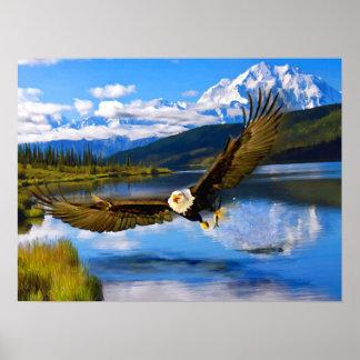 """Weißkopfseeadler, der Denali 24"""" x 18"""" Poster"""