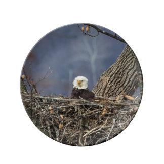Weißkopfseeadler, der einen schlechten Tag hat Porzellanteller