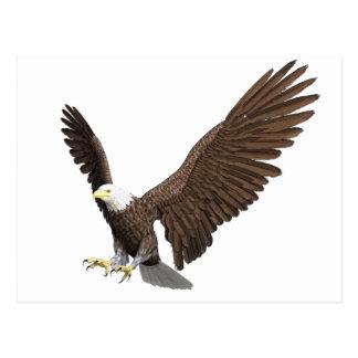 Weißkopfseeadler, der für eine Landung hereinkommt Postkarte