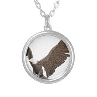 Weißkopfseeadler, der für eine Landung hereinkommt Versilberte Kette