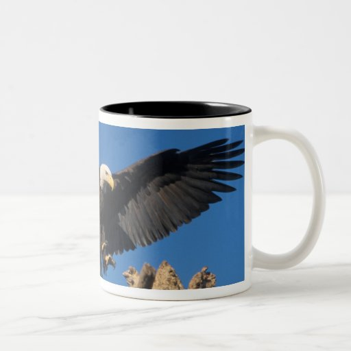 Weißkopfseeadler, Haliaeetus leuccocephalus, lande Kaffeetassen