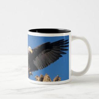 Weißkopfseeadler, Haliaeetus leuccocephalus, Zweifarbige Tasse