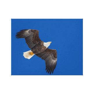 Weißkopfseeadler im blauen Himmel Leinwanddruck