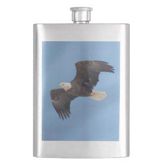 Weißkopfseeadler im Flug Flachmann