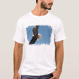 Weißkopfseeadler im Flug, Haliaeetus T-Shirt