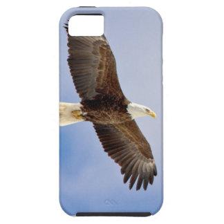 Weißkopfseeadler im Flug iPhone 5 Schutzhülle