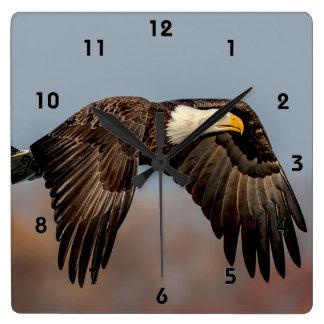 Weißkopfseeadler im Flug Quadratische Wanduhr