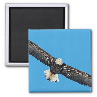 Weißkopfseeadler im Flug Quadratischer Magnet