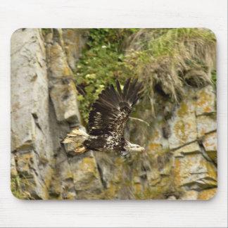 Weißkopfseeadler, Jugendlicher, Schloss-Felsen, Sh Mauspads