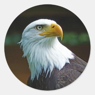 Weißkopfseeadler-Kopf 001 02,1 rd Runder Aufkleber