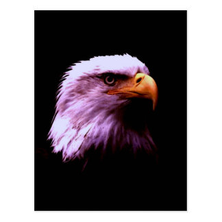 Weißkopfseeadler-Kopf Postkarten
