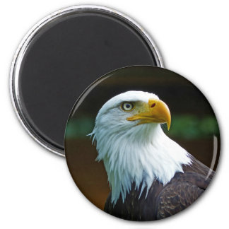 Weißkopfseeadler-Kopf Runder Magnet 5,7 Cm