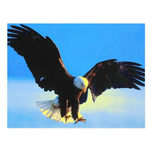 Weißkopfseeadler-Landungs-Postkarte