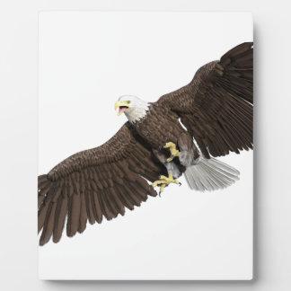 Weißkopfseeadler mit Flügeln auf unten streichen Fotoplatte