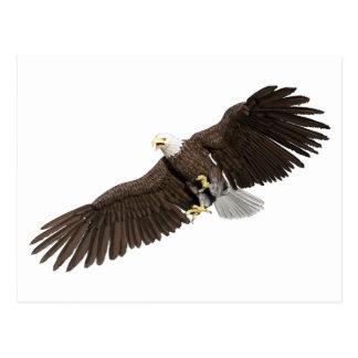Weißkopfseeadler mit Flügeln auf unten streichen Postkarte