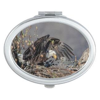 Weißkopfseeadler mit ihrem Baby Schminkspiegel